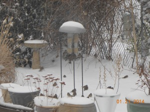 My yard and the birdies that eat there